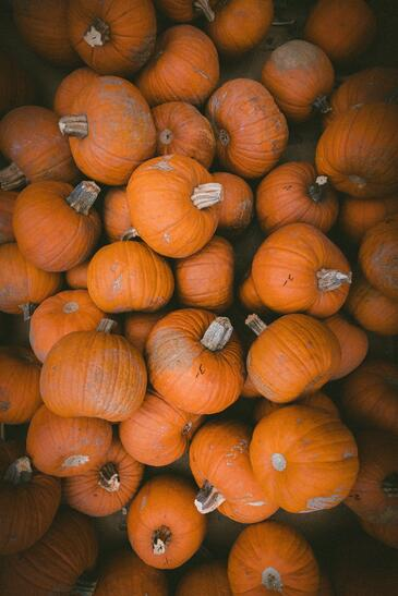 Foregenix-Blog-Pumpkins